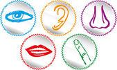 Zestaw ikon pięciu zmysłów - ilustracja wektorowa — Wektor stockowy