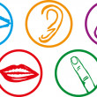 Five senses icon set - Vector Illustration - Stock Vector