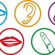 Five senses icon set - Vector Illustration - Imagen vectorial