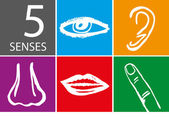 Five senses icon set - Vector Illustration — 图库矢量图片