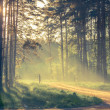 Evening forest with sun and volume light — Stock Photo #27913963