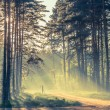 Evening forest with sun and volume light — Stock Photo