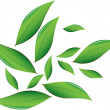 Tea leaves Vector illustration — Vettoriale Stock  #33554523