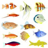 Aquarium fish — Stock Vector