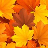 Patrón de las hojas de otoño. — Vector de stock