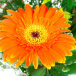 Orange flower in bouquet — Stock Photo #14898879