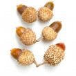 Acorns — Stock fotografie #16887471