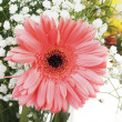 Big pink flower in bouquet — Stock Photo