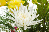 Big white flower in bouquet — Stock Photo