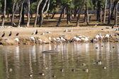 湖上的鸟 — 图库照片