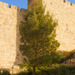 Walls of Jerusalem with pine — Stock Photo