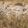 Stock Photo: Small bird in weeds