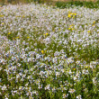 Stock Photo: Spring field with bright white flower