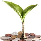 молодое растение среди монет — Стоковое фото