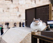 The Jerusalem cat, who sitting near Wailing Wall — Stock Photo