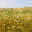 Stock Photo: The dry grass background