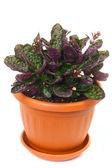 Beauty plant — Stock Photo