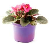 Flor violeta — Foto de Stock