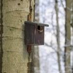 冬の森の巣箱 — ストック写真
