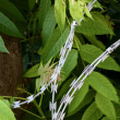 Barbed wire over green leaf — Stock Photo