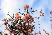 Pink flowering bush — Stockfoto