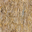 Dry hay background — Stock Photo