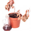 One dead plants and dusty decanter — Stock Photo