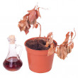 Dead plants and dusty decanter — Stock Photo