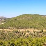 Mountain with a trees near Ein Kerem, Jerusalem — Stock Photo