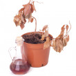 Single dead plants and dusty decanter — Stock Photo