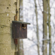 Birdhouse in winter forest — Stock fotografie