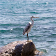 Egret — Stock Photo #35403121
