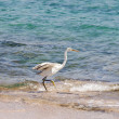 Egret — Stock Photo #35851073
