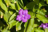 Fialový květ — Stock fotografie