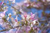 Spring flowering — Foto de Stock