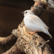 Stock Photo: Little white bird
