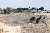 Mount Olives — Stock Photo