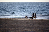Walk with dogs — Stock Photo