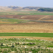 Stock Photo: Panoramof fields Israel in winter