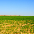 Stock Photo: Wide green field