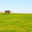 Stock Photo: Single tree in a green meadow
