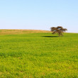 Stock Photo: Single tree in a meadow