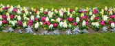 Blooming flower bed — Stock Photo