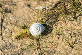 Caterpillar and snail — Stock Photo