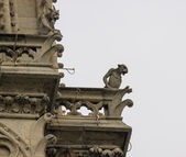 Chimeras on Notre Dame — Foto Stock