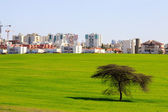 Beer Sheva suburb behind a green field and tree under blue sky — Stock Photo