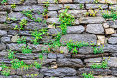 Stone wall with green plants — Stockfoto