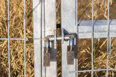 Two padlocks — Stock Photo