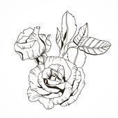 Ink drawn rose with leaves — Vector de stock