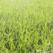 Perfect green grass texture — Stock Photo #12806203